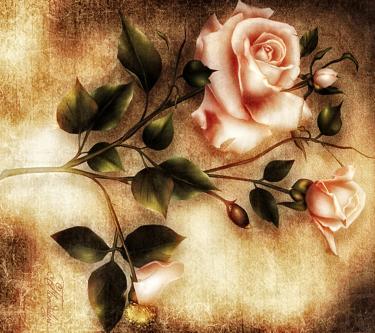 Beautiful Roses(2)